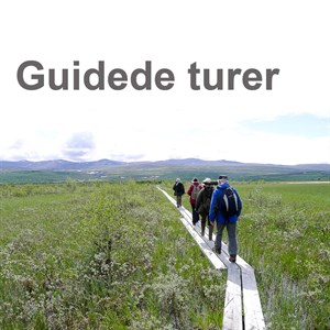 guided-tours-norsk